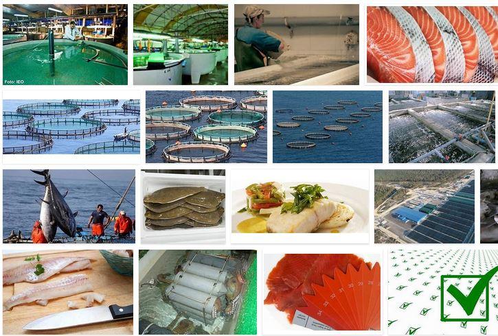 mercado de harina para piensos y comida de pescados